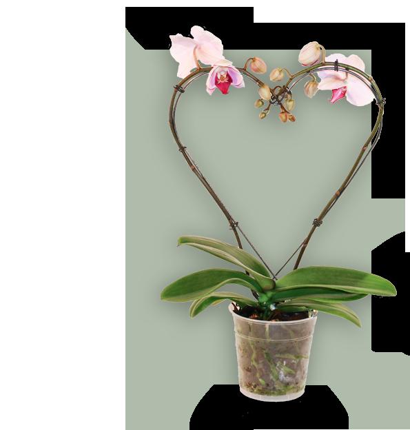 Groeivorm Hart 2D met orchidee