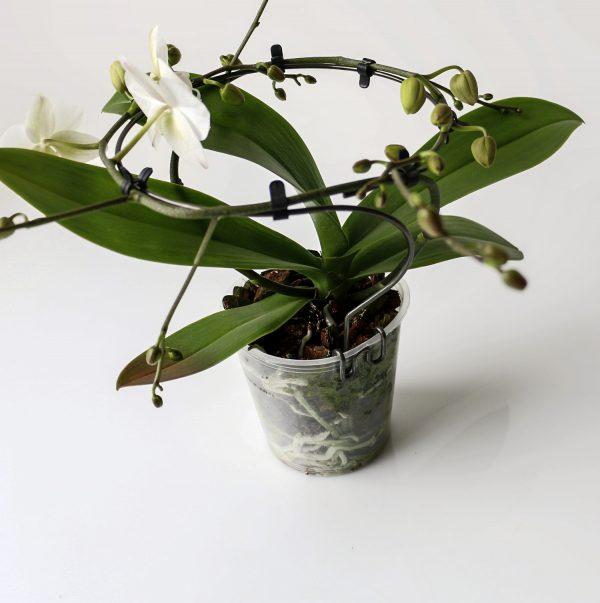 Groeivorm Rondo met orchidee